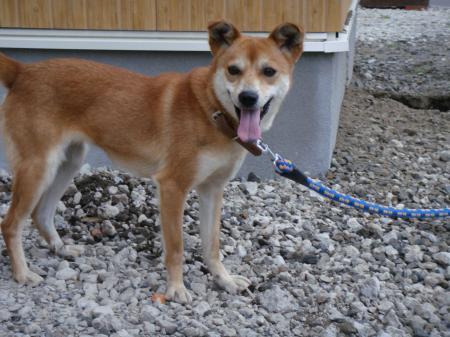 保護犬 ローラ2