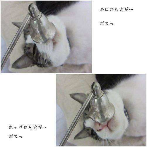 catsポスっ
