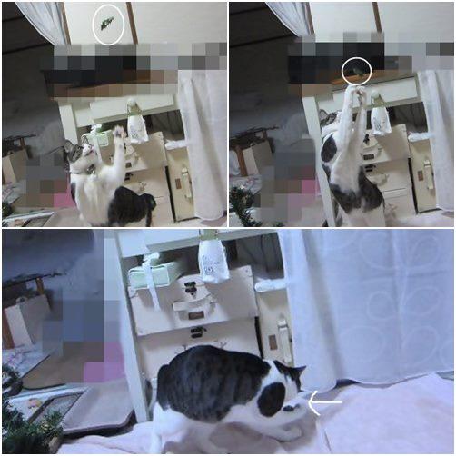 catsゲット