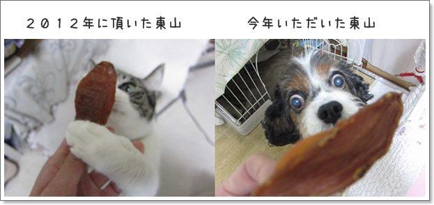 catsひがしやま