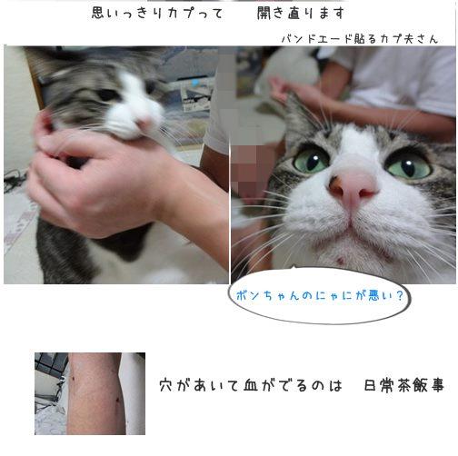 catsあな