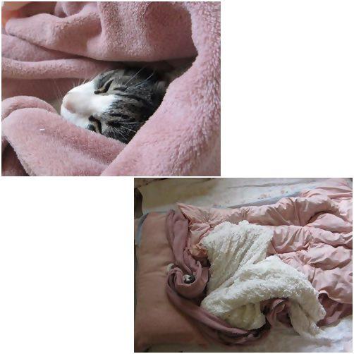 catsねむい