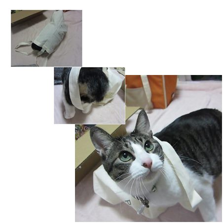 catsあそぶ