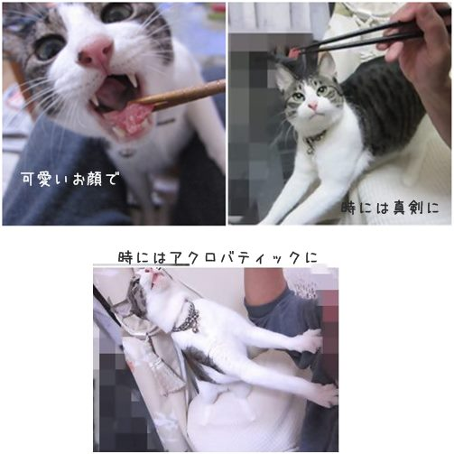 catsマグロ