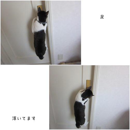 catsあし