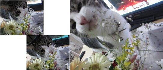catsチロ-horz1