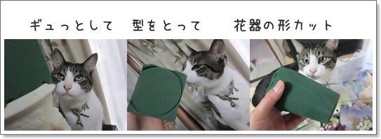 cats型