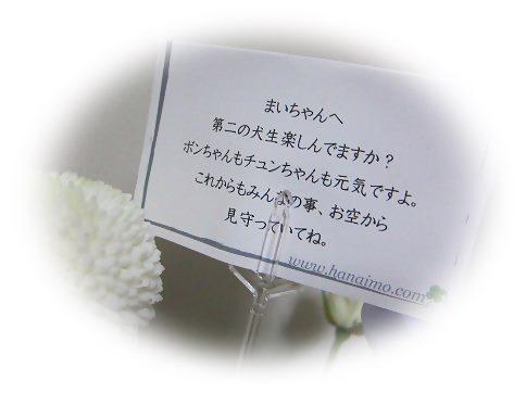 IMG_6337 2014 1 (1359)