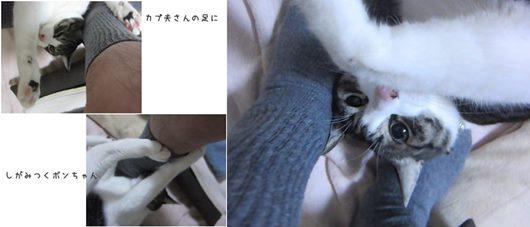 catsしがみつく