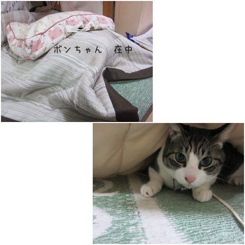 cats材ちゅう