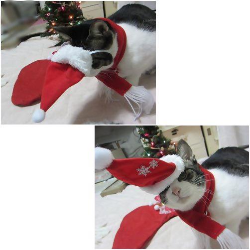 cats1_20131223182451821.jpg