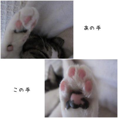 cats1_20131225160315d1f.jpg