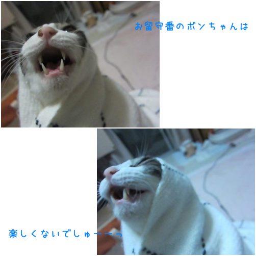 cats1_20140130020039cda.jpg