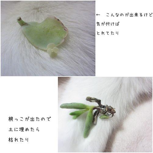 cats1_201401311805244e0.jpg