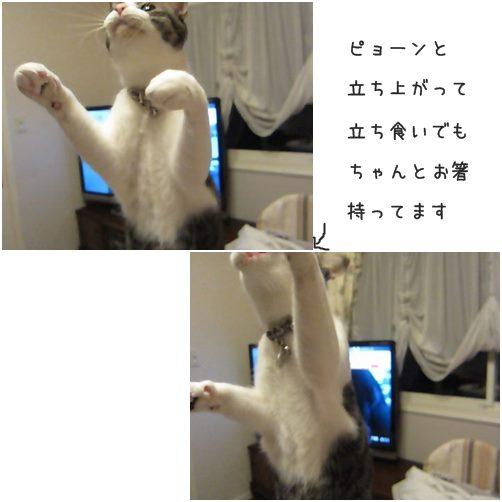 cats5_2014012216374413a.jpg