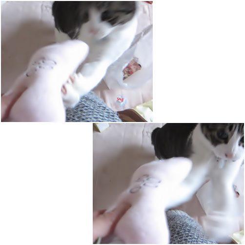 cats_201312162019052d7.jpg