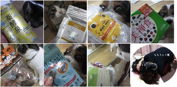 cats_20131218191939a1a.jpg