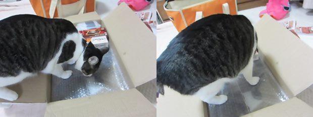 cats_20131223193900cd6.jpg