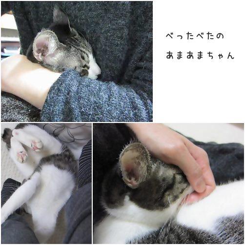 cats_20131227140934581.jpg