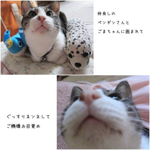cats_201401041613102a8.jpg