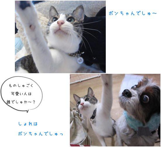 cats_20140104192614ab1.jpg