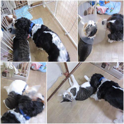 cats_20140106192532c37.jpg