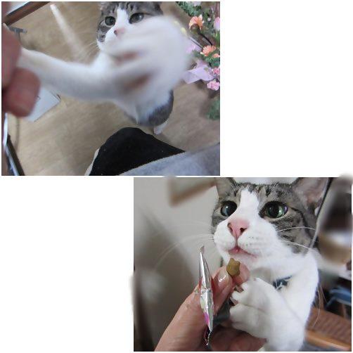 cats_2014011016055359b.jpg