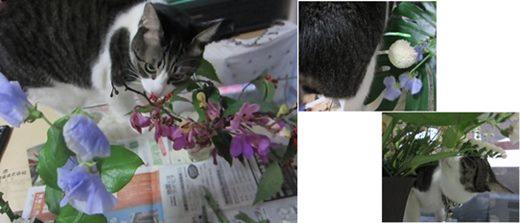 cats_20140117195712a2c.jpg
