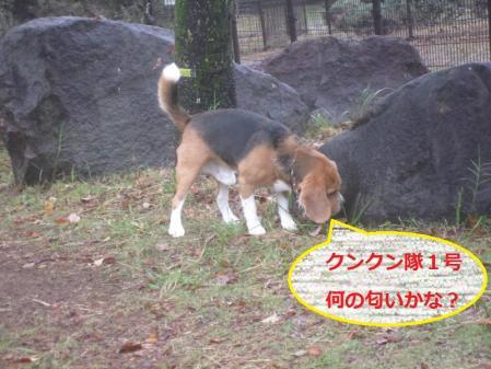 004_convert_20111018211138.jpg