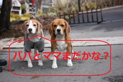 017_convert_20111113210112.jpg