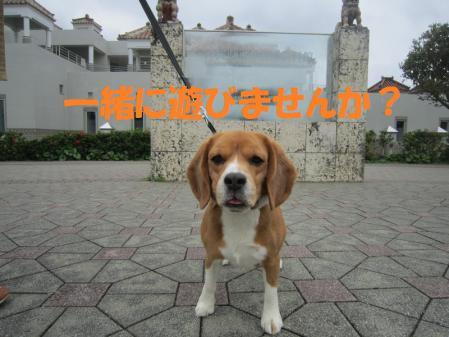 028_20130126003155.jpg