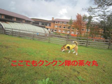 029_convert_20111018211636.jpg