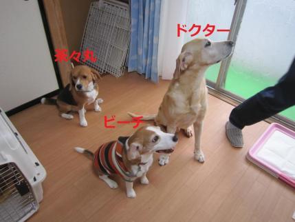 040_convert_20111113112125.jpg