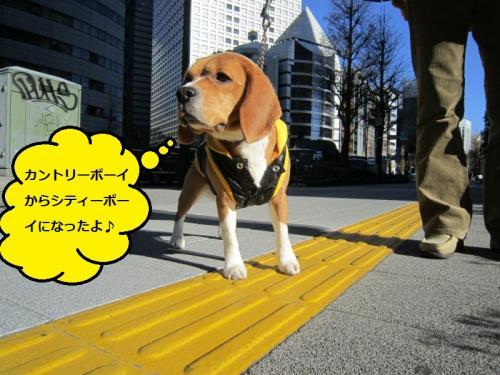 075_convert_20110114200559.jpg