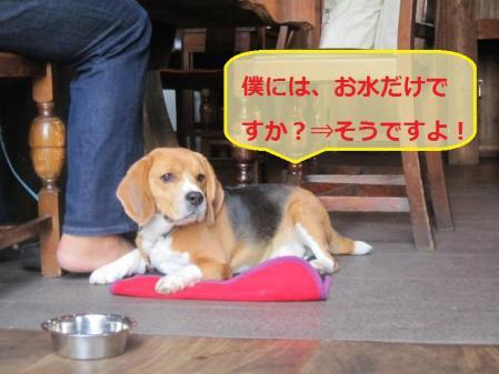 110_convert_20111020214147.jpg