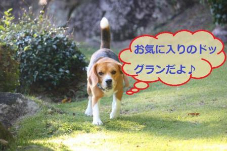 129_convert_20111022185340.jpg
