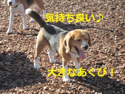 162_convert_20111113203112.jpg