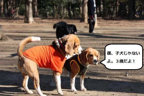 201_convert_20110114201921.jpg