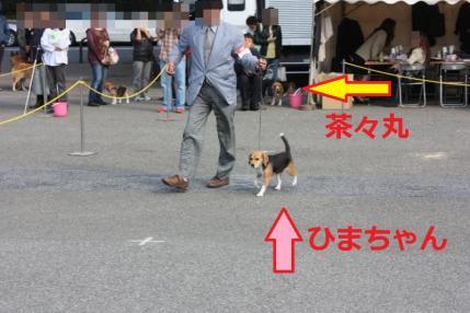 233_convert_20111102222947.jpg
