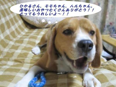 IMG_0212_convert_20111216000714.jpg