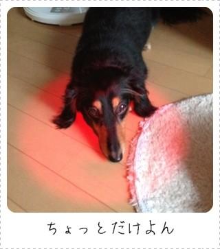 IMG_9891.jpg