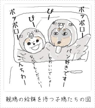 hatoka.jpg