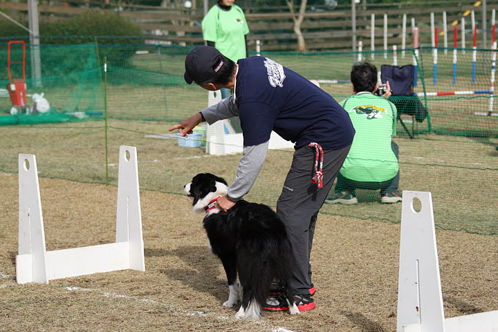 Flyball 0472