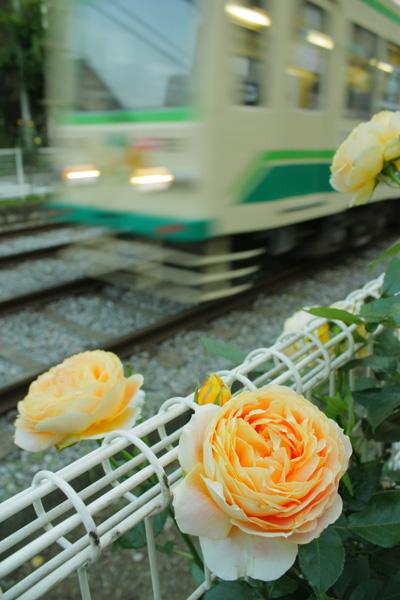 photo253.jpg