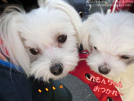 20141127_12.jpg