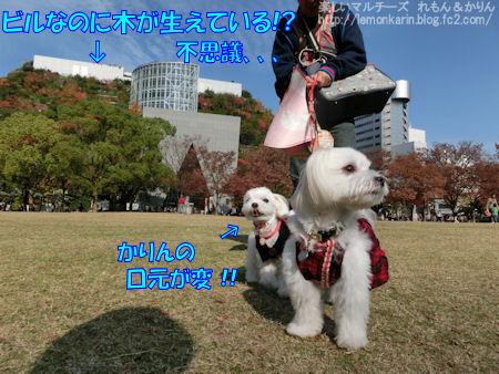 20141128_10.jpg