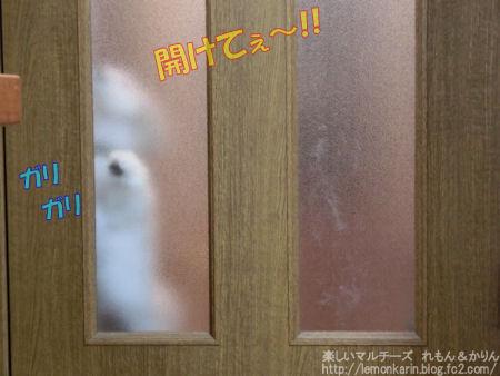 20141204_04.jpg
