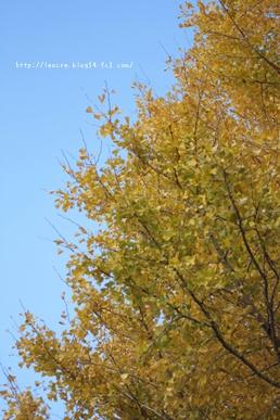 22_20111205232148.jpg