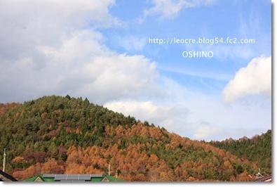 26_20111118225114.jpg