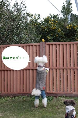 55_20111129013847.jpg